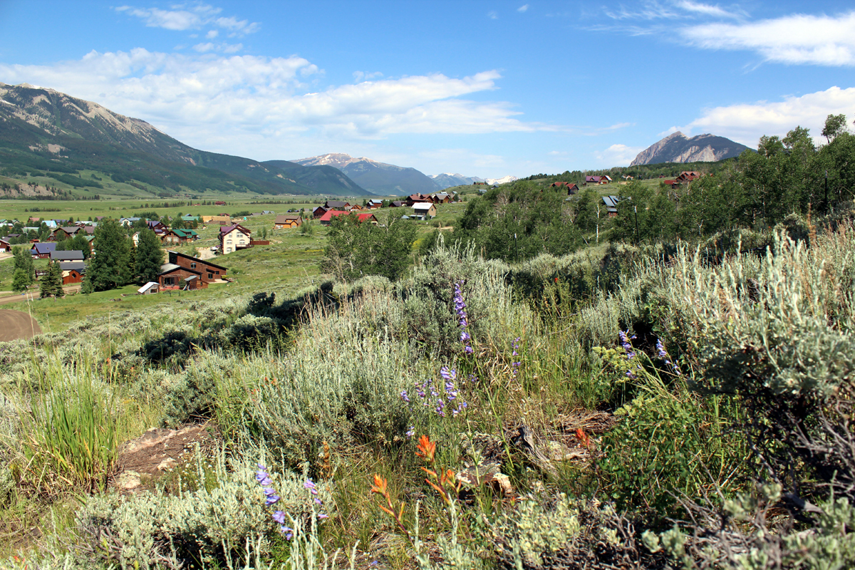 flowers in crested butte south