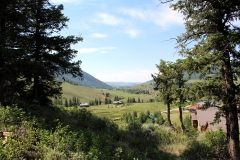 crested butte south lot with trees